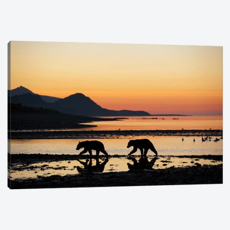 Grizzly Bear Cubs Walking Along Kukak Bay Before Sunrise On Late Summer Morning USA, Alaska, Katmai National Park. Canvas Print #PSO24} by Paul Souders Canvas Artwork