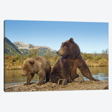 Grizzly Bear Sow And Cub Rest While Feeding By Stream, Katmai National Park & Preserve Canvas Print #PSO25} by Paul Souders Canvas Wall Art