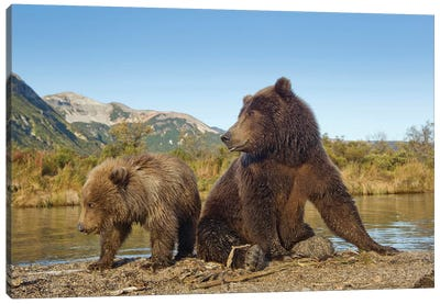 Grizzly Bear Sow And Cub Rest While Feeding By Stream, Katmai National Park & Preserve Canvas Art Print