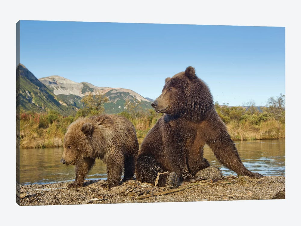 Grizzly Bear Sow And Cub Rest While Feeding By Stream, Katmai National Park & Preserve by Paul Souders 1-piece Canvas Art Print