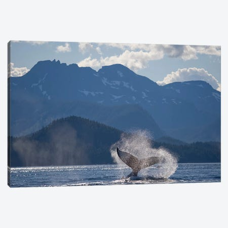 Humpback Whale's Tail, Chatham Strait, Alaska, USA Canvas Print #PSO6} by Paul Souders Art Print
