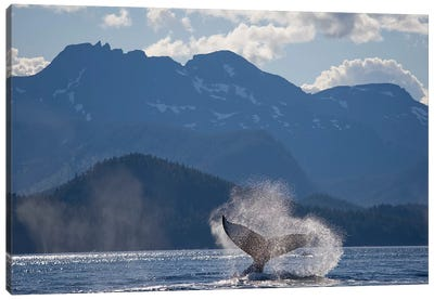 Humpback Whale's Tail, Chatham Strait, Alaska, USA Canvas Art Print