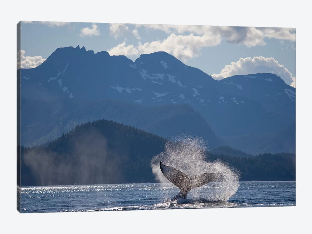 Humpback Whale's Tail, Chatham Strait, Alaska, USA by Paul Souders 1-piece Art Print