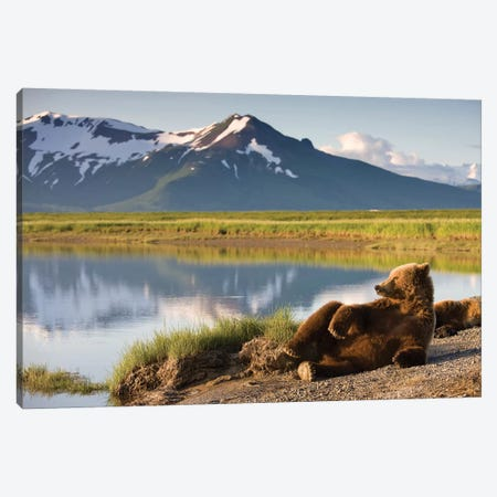 Lounging Grizzly Bear Near Hallo Bay, Katmai National Park, Alaska, USA Canvas Print #PSO9} by Paul Souders Canvas Art