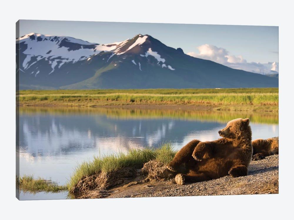 Lounging Grizzly Bear Near Hallo Bay, Katmai National Park, Alaska, USA by Paul Souders 1-piece Canvas Artwork