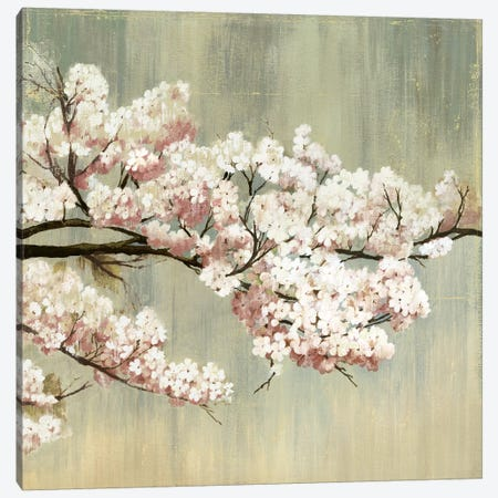 Blossoms I Canvas Print #PST103} by PI Studio Canvas Art Print
