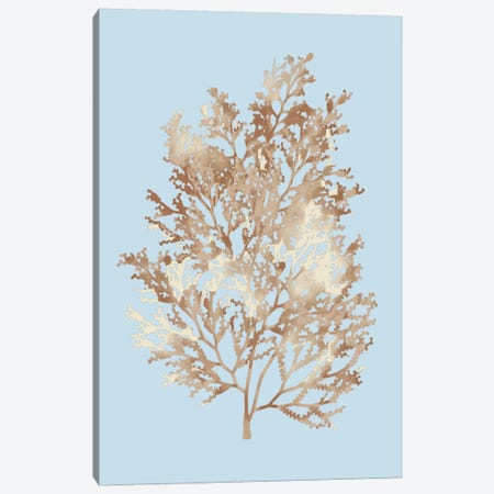 Coral III Canvas Print #PST190} by PI Studio Canvas Wall Art