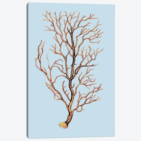 Coral IV Canvas Print #PST191} by PI Studio Canvas Wall Art