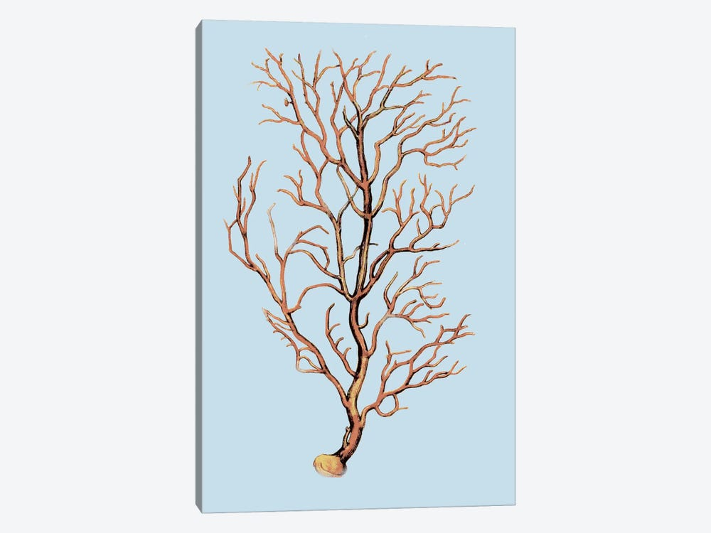 Coral IV by PI Studio 1-piece Canvas Art Print