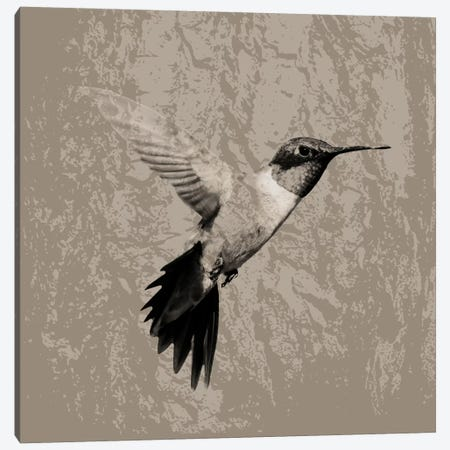 Feathered I Canvas Print #PST250} by PI Studio Canvas Art Print