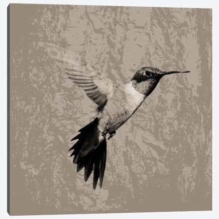 Feathered I Canvas Print #PST250} by PI Studio Canvas Art Print