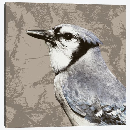 Feathered III Canvas Print #PST252} by PI Studio Art Print