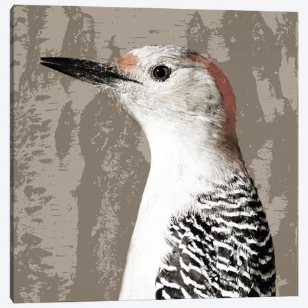 Feathered IV Canvas Print #PST253} by PI Studio Canvas Art Print