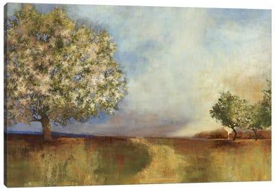 Apple Orchard Canvas Art Print