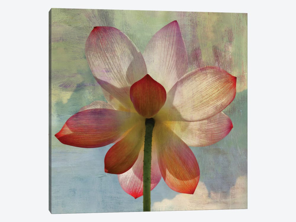 Lovely Lily II by PI Studio 1-piece Canvas Artwork