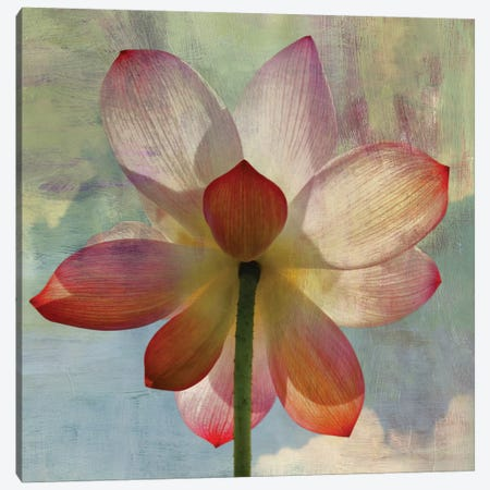 Lovely Lily II Canvas Print #PST432} by PI Studio Canvas Art Print