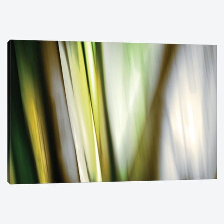 Organic II Canvas Print #PST530} by PI Studio Canvas Art