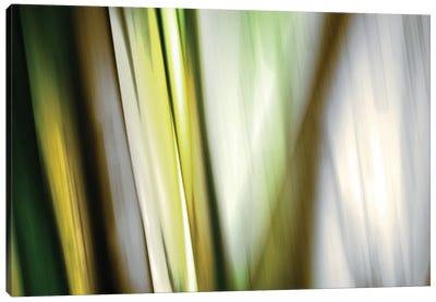 Organic II Canvas Art Print