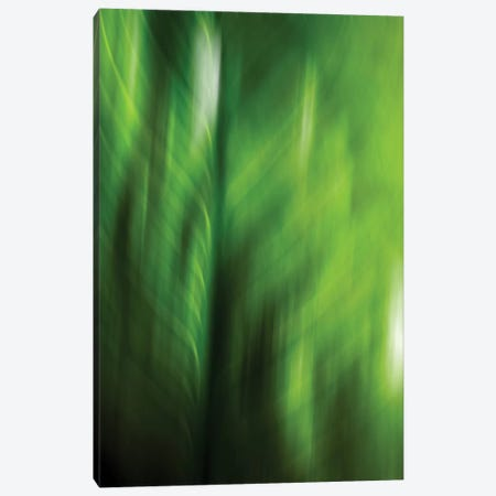 Organic V Canvas Print #PST533} by PI Studio Canvas Art