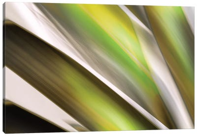 Organic VI Canvas Art Print