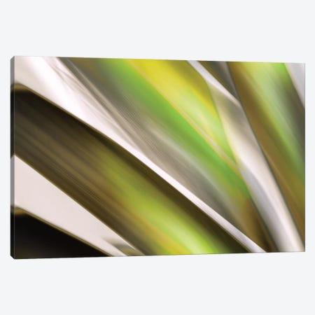 Organic VI Canvas Print #PST534} by PI Studio Canvas Art Print