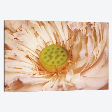 Peaches And Cream Canvas Print #PST572} by PI Studio Canvas Wall Art