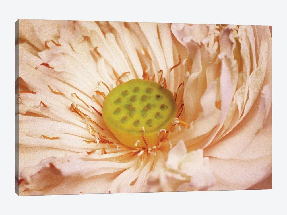 Peaches And Cream by PI Studio 1-piece Art Print