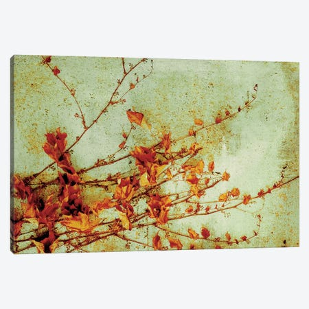 Persimmon Canvas Print #PST581} by PI Studio Art Print