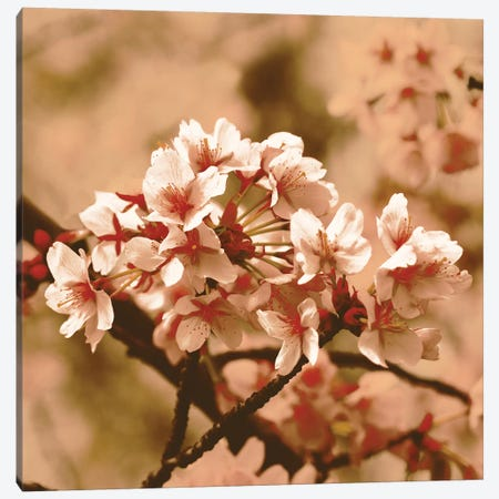 Posy Canvas Print #PST597} by PI Studio Canvas Print