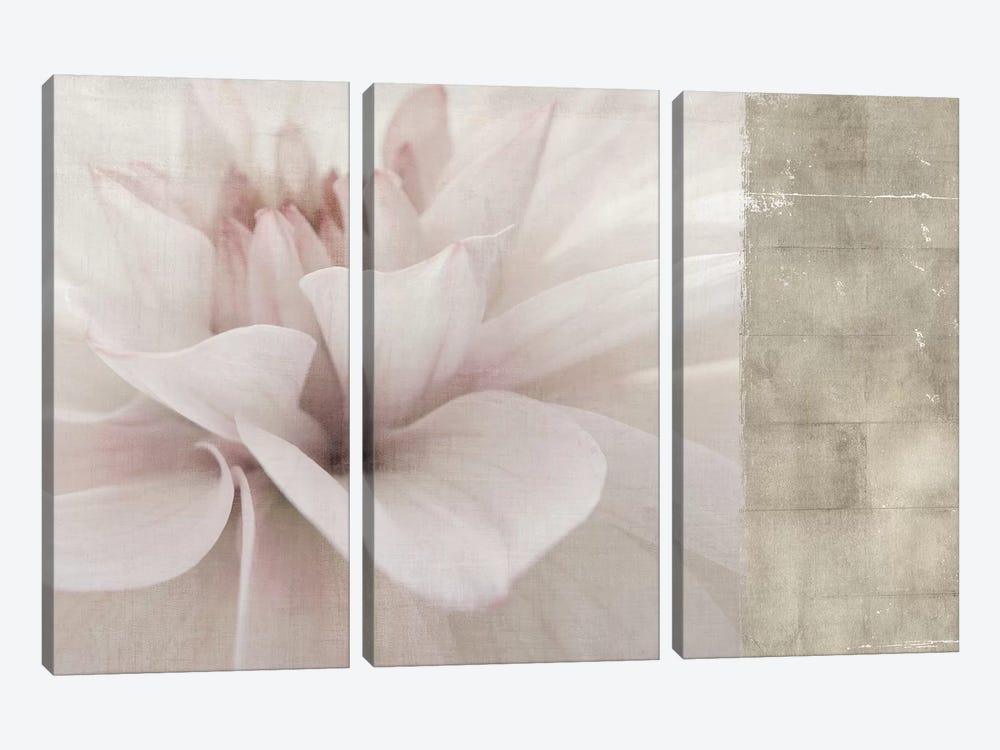 Softness by PI Studio 3-piece Canvas Wall Art