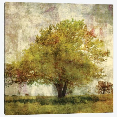 Vintage Tree Canvas Print #PST823} by PI Studio Canvas Wall Art