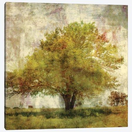 Vintage Tree Canvas Print #PST823} by PI Studio Canvas Wall Art
