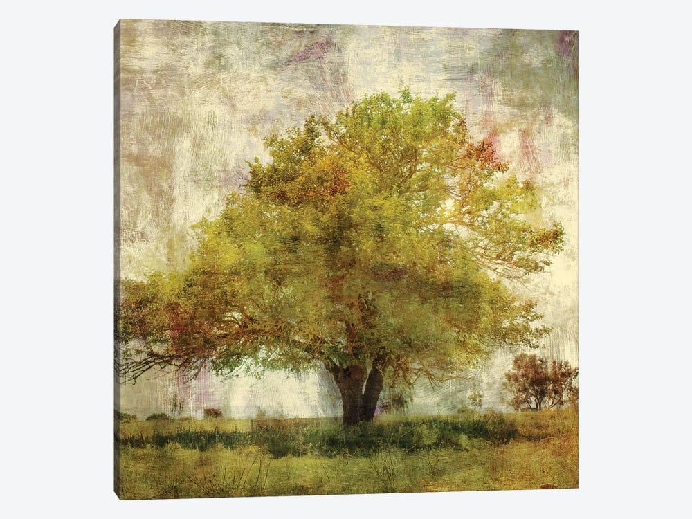 Vintage Tree by PI Studio 1-piece Canvas Artwork