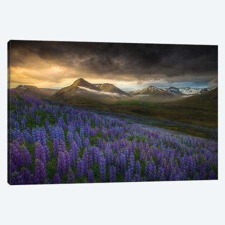 Blue Meadows Canvas Print #PSV5} by Peter Svoboda Canvas Print
