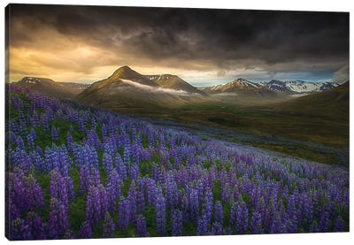Blue Meadows Canvas Art Print