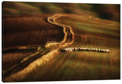 Crossing The Fields Canvas Art Print