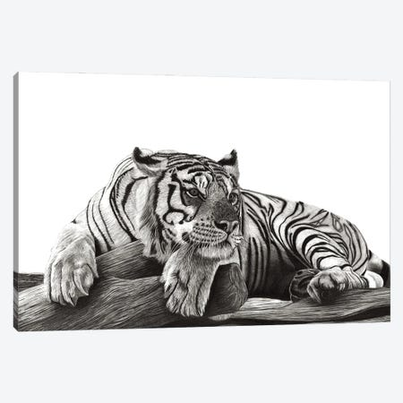 Resting Tiger Canvas Print #PSW16} by Paul Stowe Canvas Art Print