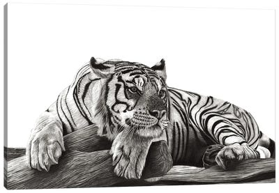 Resting Tiger Canvas Art Print