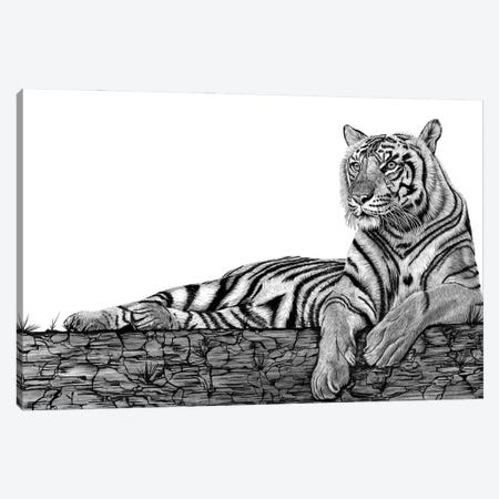 Tigers Rest Canvas Print #PSW17} by Paul Stowe Canvas Print