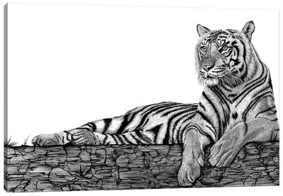 Tigers Rest Canvas Art Print
