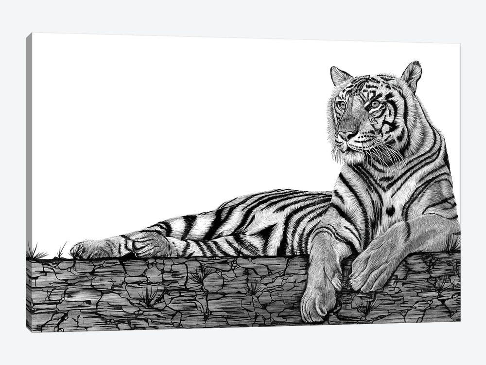 Tigers Rest by Paul Stowe 1-piece Canvas Artwork