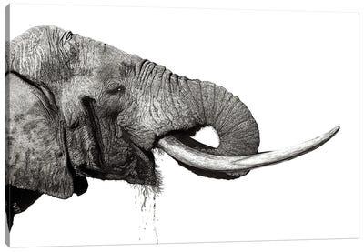 Tusker Canvas Art Print