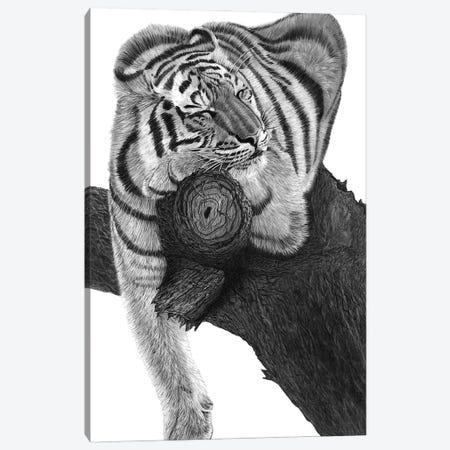 Sleeping Tiger Canvas Print #PSW28} by Paul Stowe Canvas Art Print