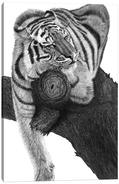 Sleeping Tiger Canvas Art Print