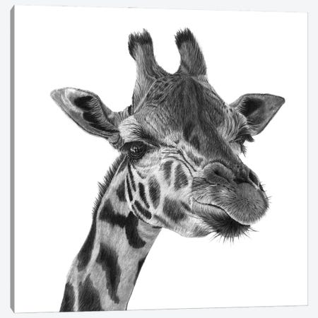 Giraffe Canvas Print #PSW65} by Paul Stowe Canvas Wall Art