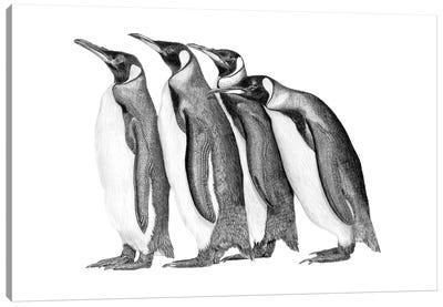 Penguin Parade Canvas Art Print