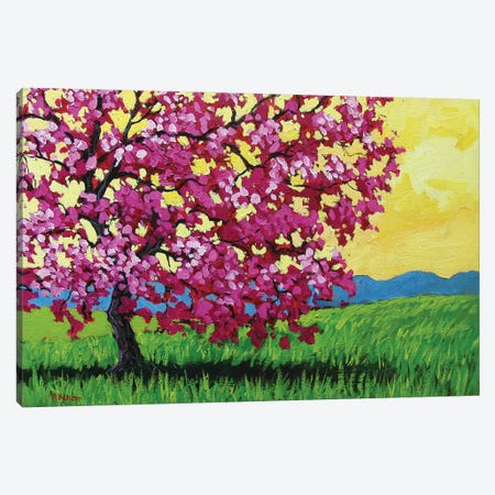 Pink Blossoms and Yellow Sky Canvas Print #PTB100} by Patty Baker Canvas Art