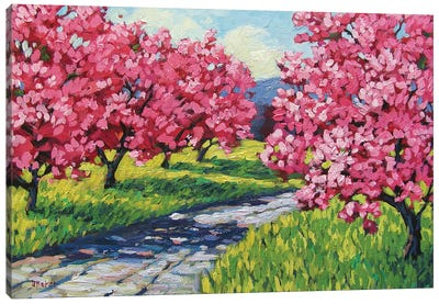 Road Through and Orchard Canvas Art Print