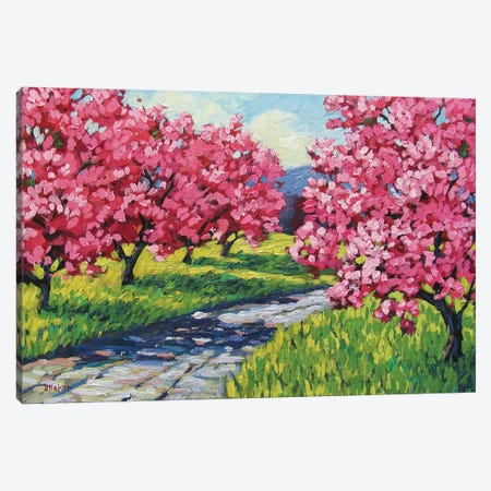 Road Through and Orchard Canvas Print #PTB120} by Patty Baker Canvas Artwork