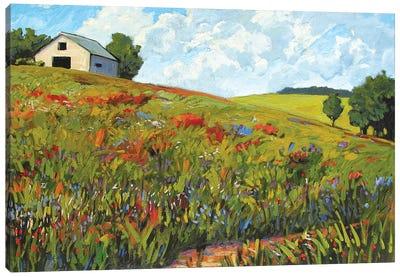 Wildflower Hillside in Boulder County, CO Canvas Art Print